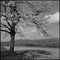 Photo de Gustave Roud