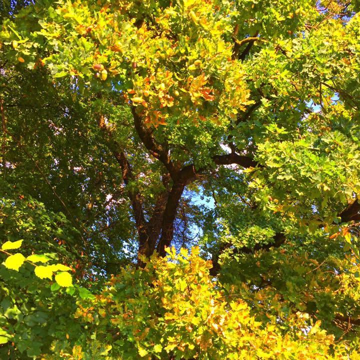 Balade poétique d'arbre en arbre