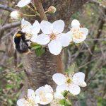 Haïkus du printemps